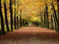 Laan met bomen in bos op weg naar